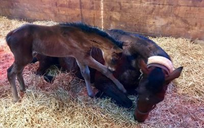 Paris gets a new filly in Pennsylvania