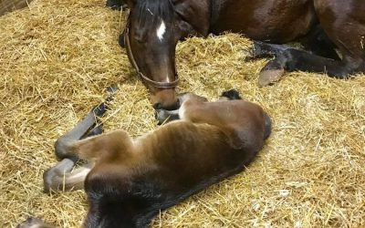 Telli meets her 24hr old colt