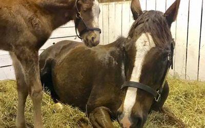 Scotty visits Kentucky to be momma to this handsome colt