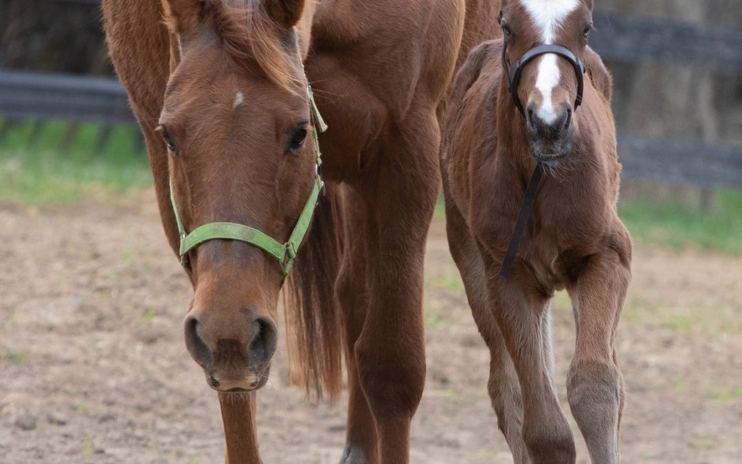 Thelma gets a sassy filly named Edith