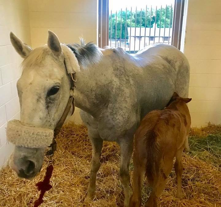Barbie gets to visit Florida to be momma to a filly