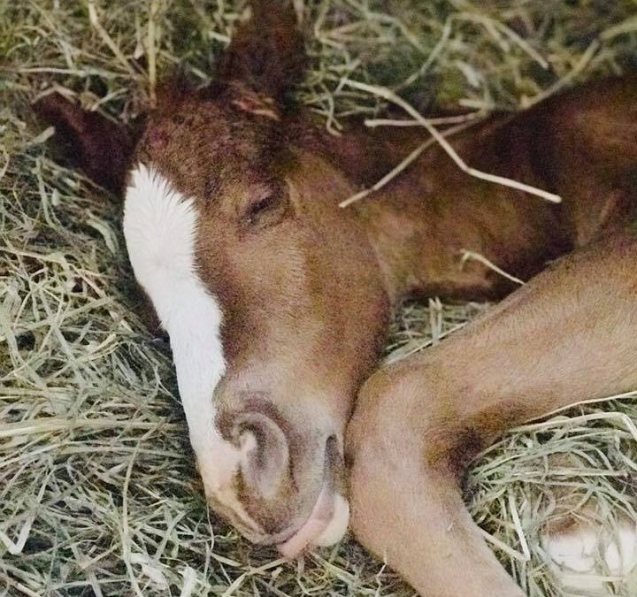 Thicket rescues a colt in West Virginia and gets another chance at motherhood