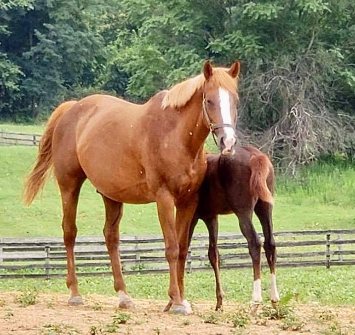 Sunshine gets to momma a new filly