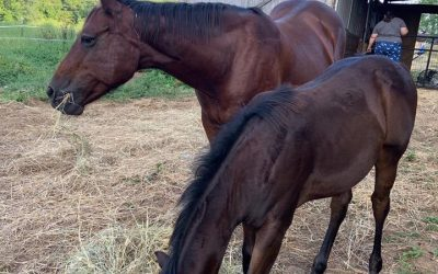 Lolita travels to West Virginia to meet her filly