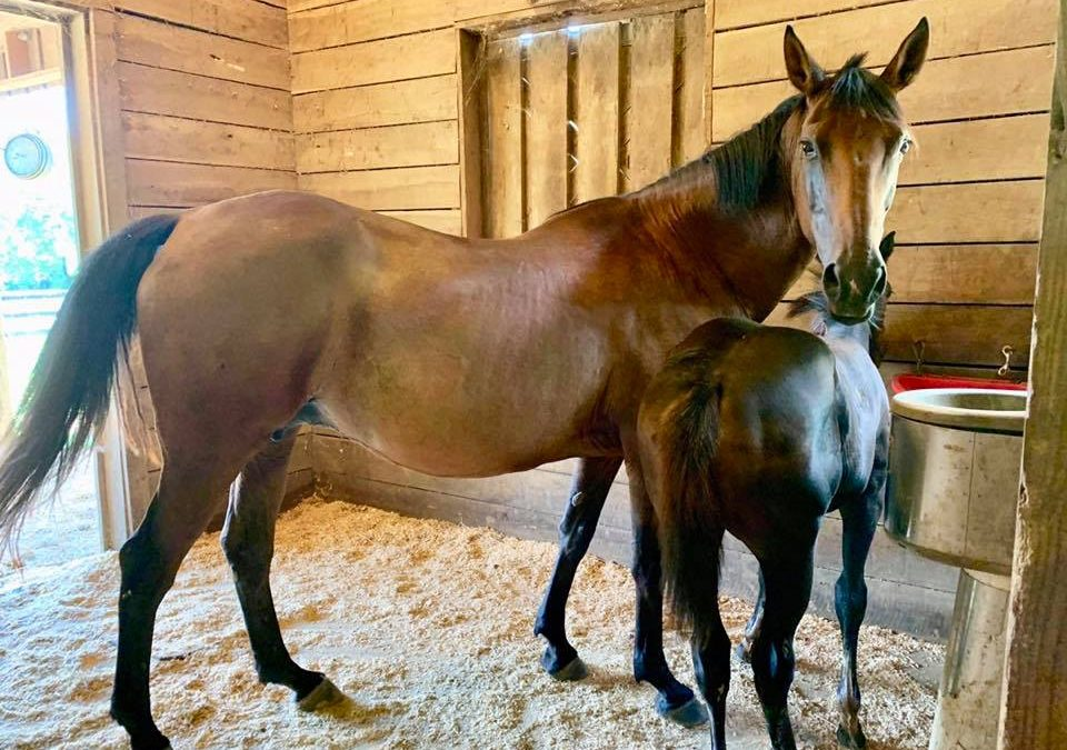 May gets a 2 week old filly in North Carolina