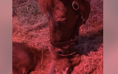 Louise Meets Her New Filly Before Sunrise In Ocala, Florida!
