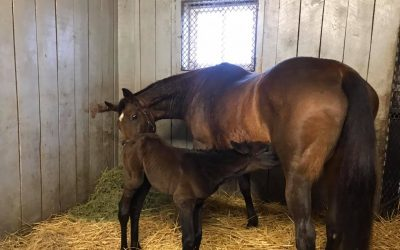 Dixie Goes To Kentucky To Meet Her Orphan Colt