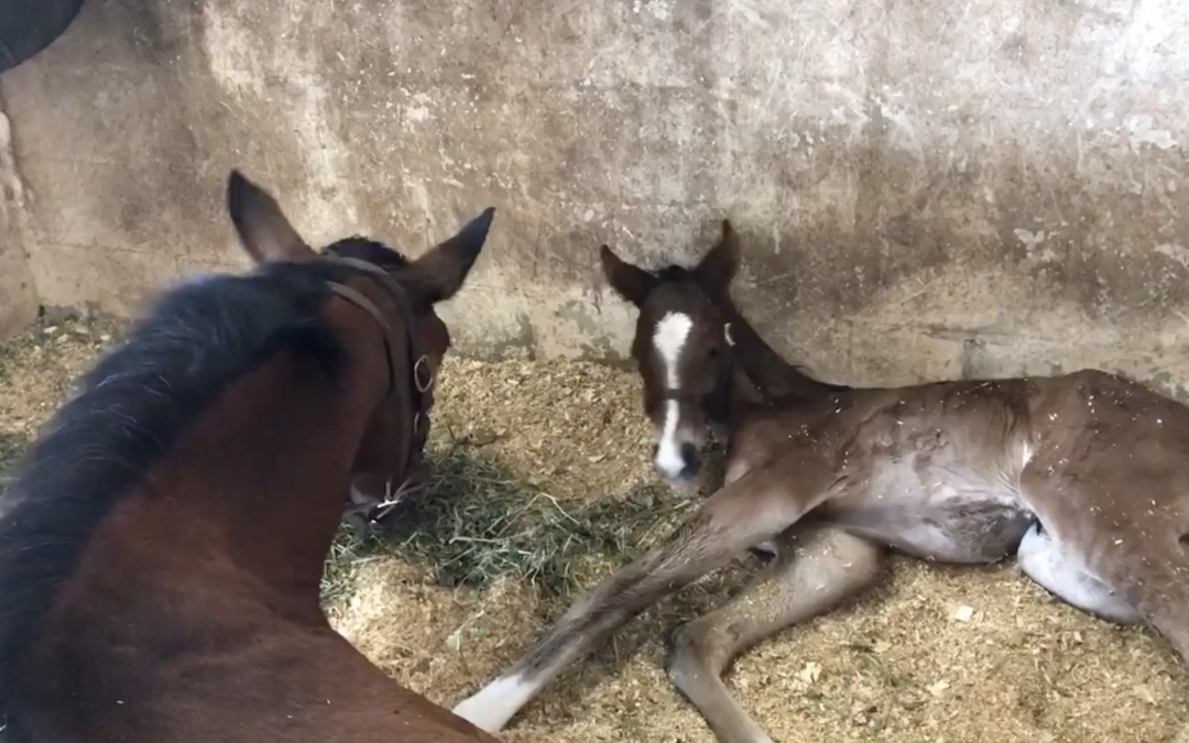 May Accepts Her Colt in Seconds Of Seeing Him