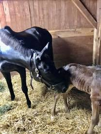 Halo was ecstatic when she met her filly